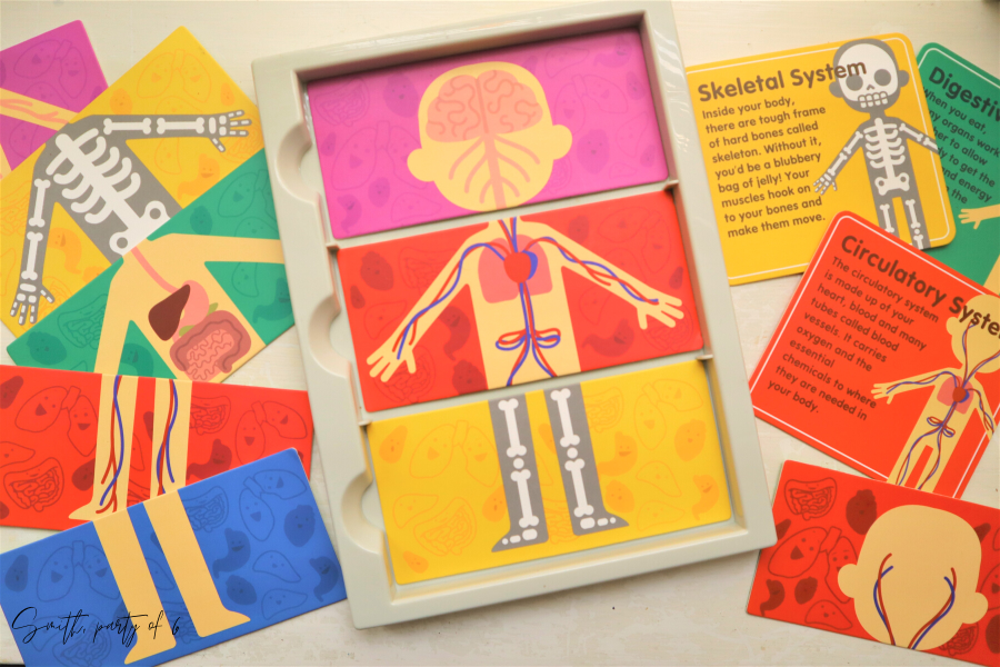 Body Systems Cards for Human Body Unit Study