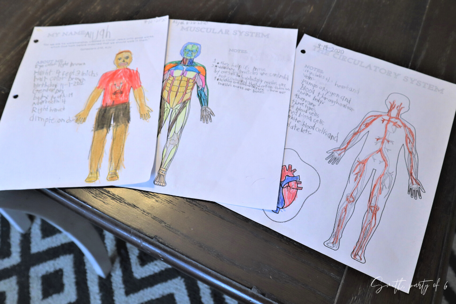 Science Journal Pages for Human Body Unit Study