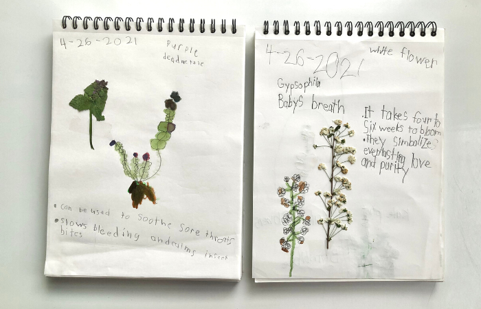 Nature Study Pages